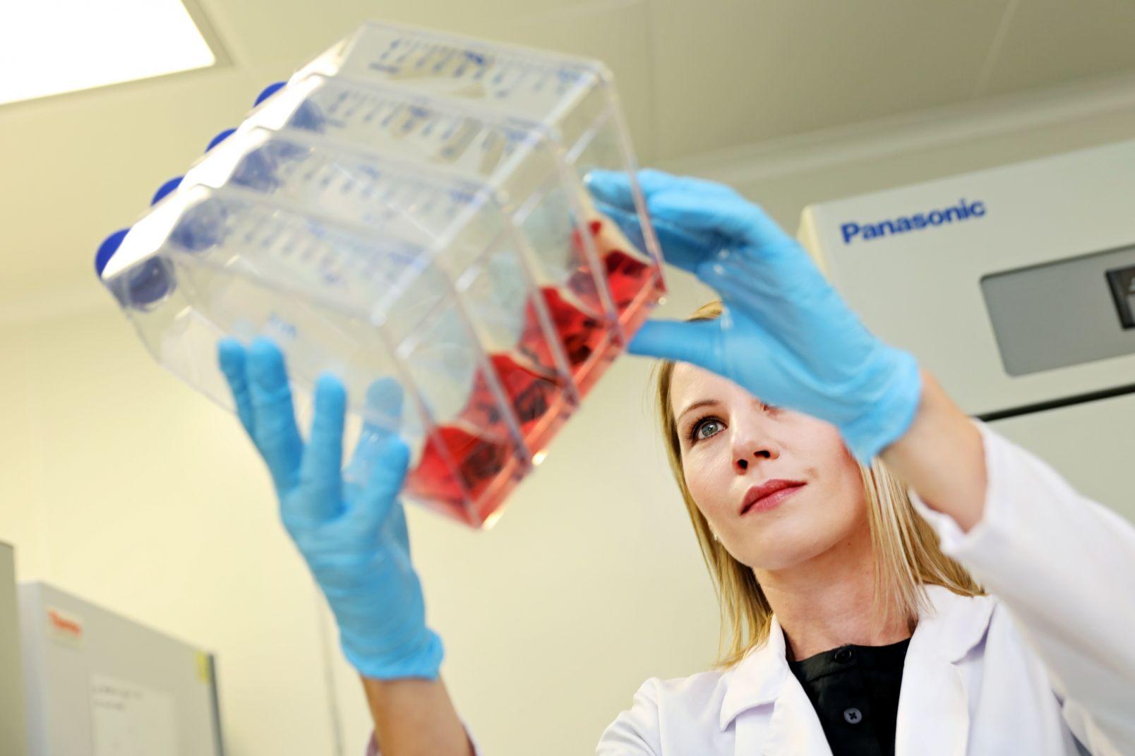 Prof. Marta Pokrywczyńska z hodowlą komórek macierzystych
